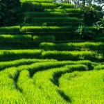2 of the best places in Bali to reach early to avoid the crowd